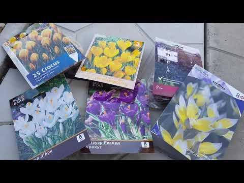 Обзор покупок из Леруа Мерлен/Цветы из Лукоморья/Цветочные композиции в начале осени/ [мультифлоры]