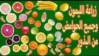 زراعة الليمون ,البرتقال,اليوسفي ,الجريب فروت | من البذور |