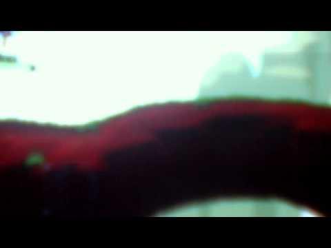Video de cámara web de Martin Y Nico Hackers Hackers Supremos del  6 de junio de 2012 09:53 (PDT)