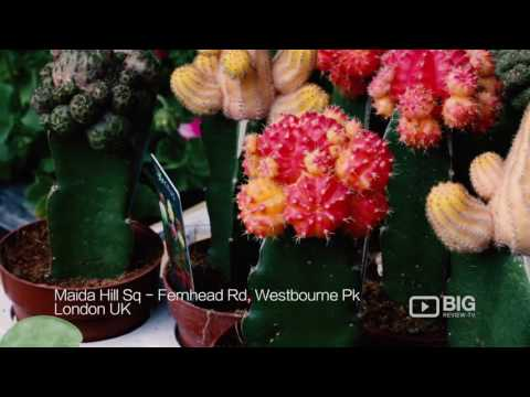 Fernhead Flowers and Gardens Florist in London UK for Beautiful Flowers and Plants