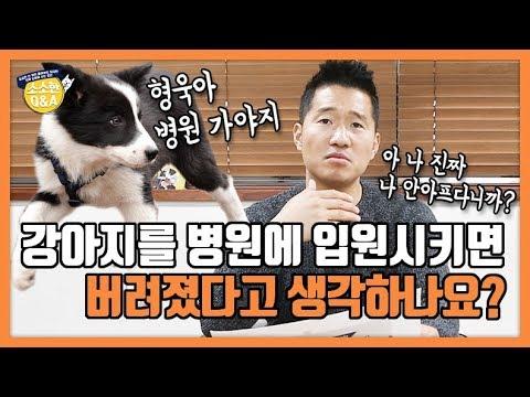 [Eng sub] 강아지를 병원에 입원시키면 버려졌다고 생각하나요?|강형욱의 소소한 Q&A