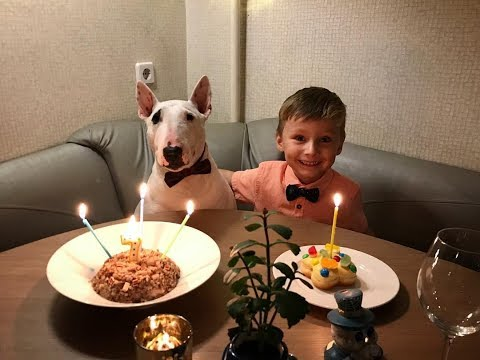 Bull terrier dogs and babies become best friend -  Dog and baby funny Videos