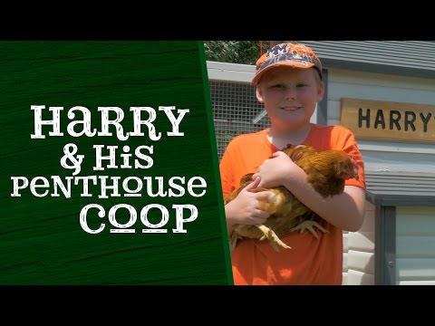 Harry and his Penthouse Chicken Coop