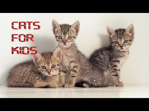 Cats for Kids - Cute and Funny Animal Videos for Children.. Cats are beautiful animals...Love cats..