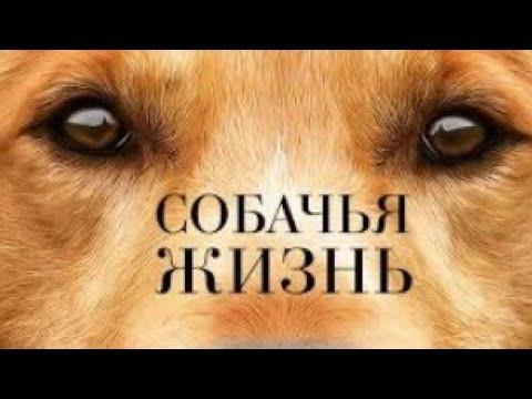 """Советую посмотреть фильм """"Собачья Жизнь"""" (A Dog's Purpose)"""