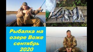 Рыбалка на озере Воже сентябрь 2020. Шикарная осенняя природа))) Вкусный жареный судак!!!)))