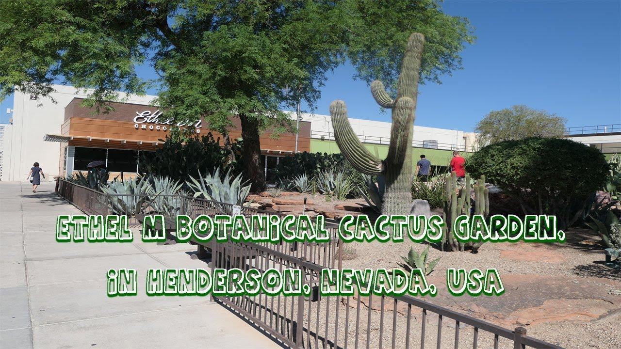 The Ethel M Botanical Cactus Garden In Henderson, Nevada, USA