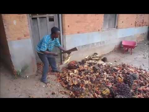 Basankusu: How to make Palm Oil