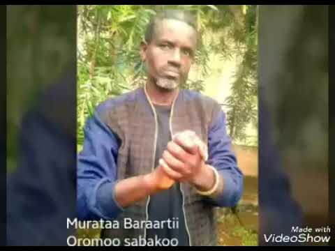 Weellisa jalaatama fi kabajaama muraata baraartii New Oromo muciq Oromo sabni koo