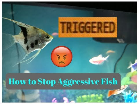 How To Stop Fish Aggression