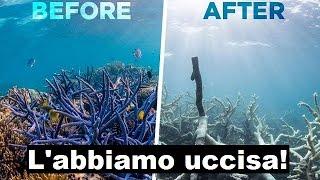 La Grande barriera corallina è morta!