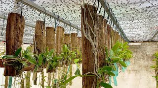 Como Cultivar Orquídeas – Dicas Infalíveis