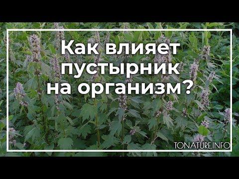 Как влияет пустырник на организм? | ToNature.Info