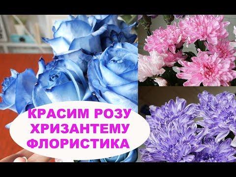 Вопрос: Как красят живую розу в синий цвет (см)?