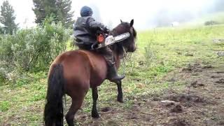 Конный тур (Алтай:К замкам горных духов)(Полный отчет о моем конном туре в горах Алтая на https://sites.google.com/site/edvardoss/, 2010-09-04T18:31:13.000Z)