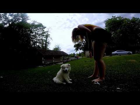 Nouky Puppy Samoyed - First Bath
