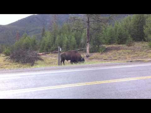 Elisa's new friend at Yellowstone