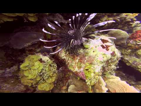 Bonaire dive - fish identify video