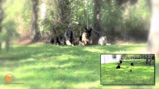 Fine-tuned Canines Naples, Florida Dog Training And Dog Psychology