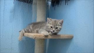 Гостиница для кошек Екатеринбург