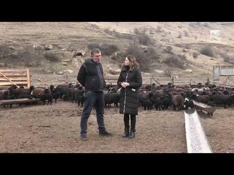 Сельский кластер - Сельское хозяйство в период пандемии (29.04.2020)