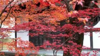 2010.11.28 永観堂と妙心寺にて。京人形のような可愛らしい舞妓さんも登...
