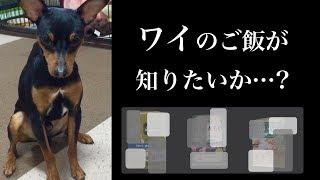 Funny dog eats dog food! ミニピン力男でーす♪ カリカリごはん最高!!...