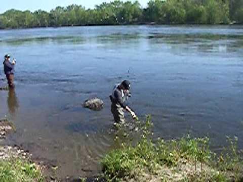 Conn  River Shad Fishing