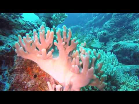 Diving Trip to Tenggol Island, Terengganu, Malaysia