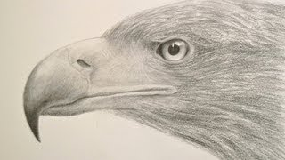 How to Draw a Realistic Eagle Head - Drawing Textures