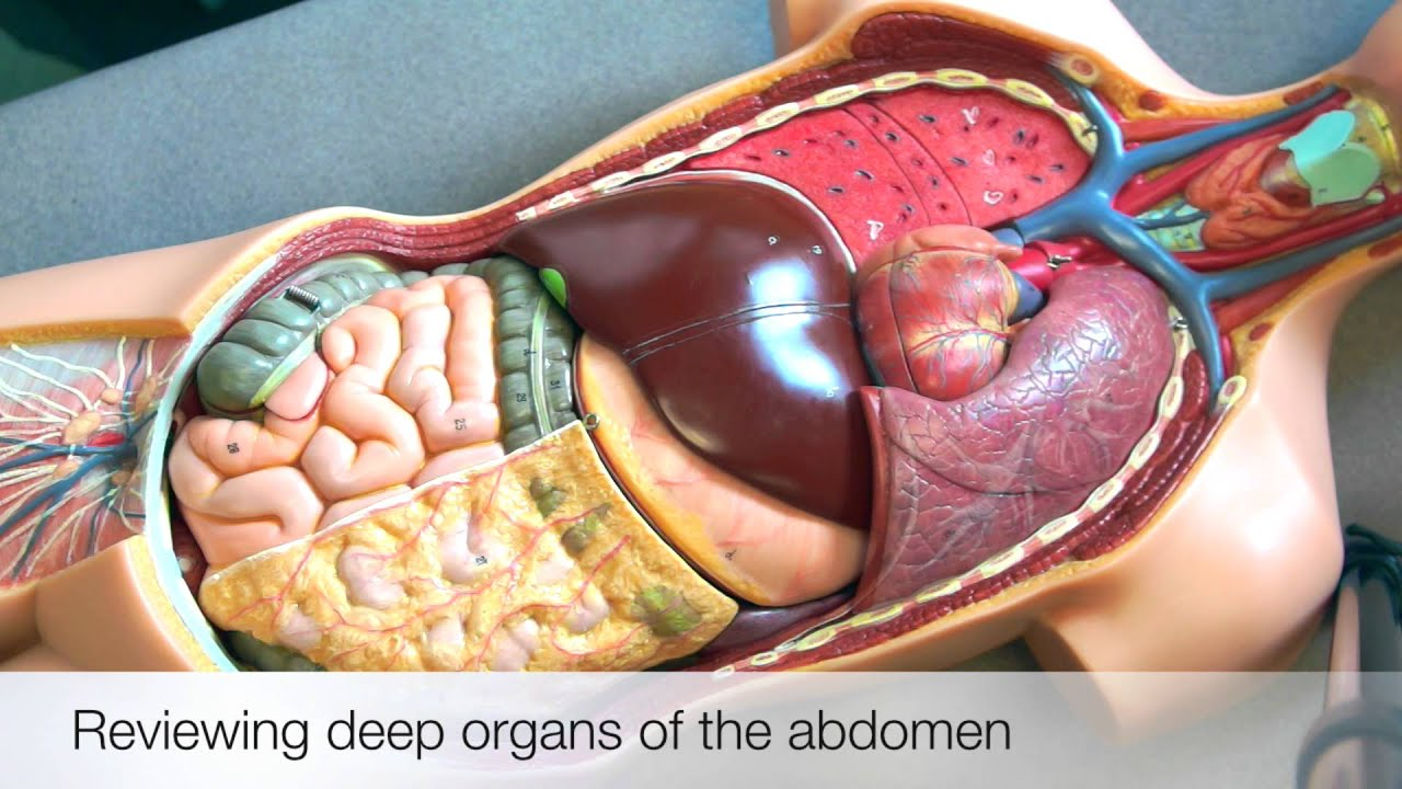 Clinical skills abdominal examination additional information youtube clinical skills abdominal examination additional information ccuart Image collections