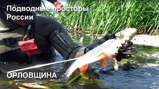 Орловщина Подводные просторы России