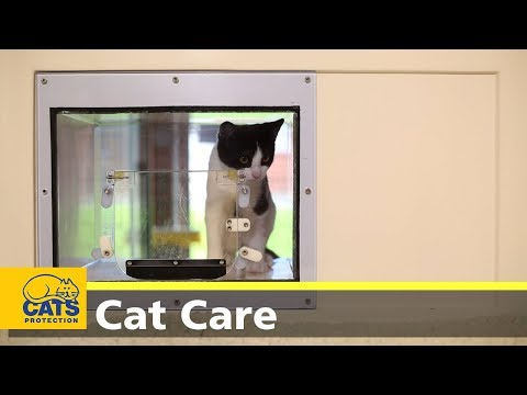 Kitten care part three: introductions