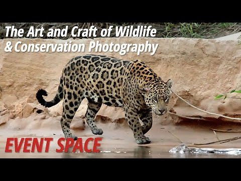 The Art and Craft of Wildlife and Conservation Photography