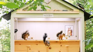 Movie Squirrels Nut Bar 2  Busy Day at the bar