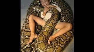 Укус ядовитой змеи кобра анаконда рефлекс