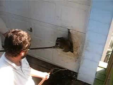 Racoon stuck in my garage door  YouTube