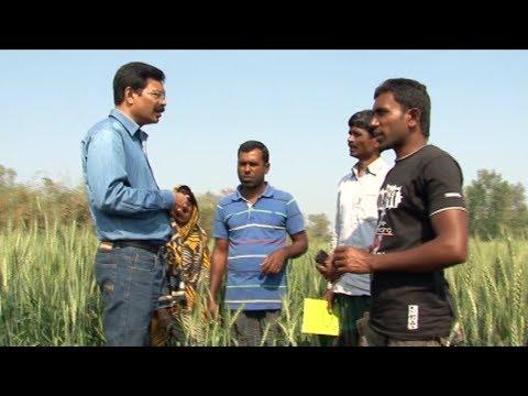 ধংস করছে তামাক চাষ | Tobacco farming is destroyed