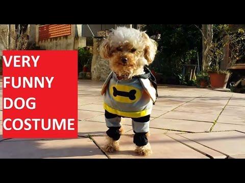 & VERY FUNNY DOG COSTUME Batman comic superhero - YouTube