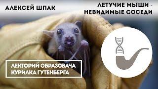 Алексей Шпак - Летучие мыши - невидимые соседи