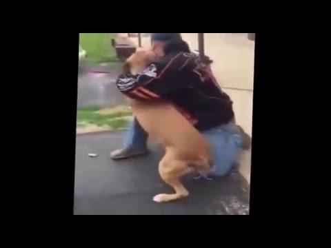 Похищенную собаку вернули хозяину спустя два года