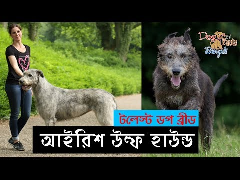 Irish Wolfhound Dog Facts in Bengali | Dog Facts Bengali | Irish Dog