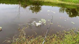 Щука и окунь на спиннинг Карась на поплавочку Рыбалка на малой реке