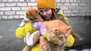 Видео-презентация команды школы номер 2, Г. Красноуфимск(, 2015-11-04T18:25:26.000Z)