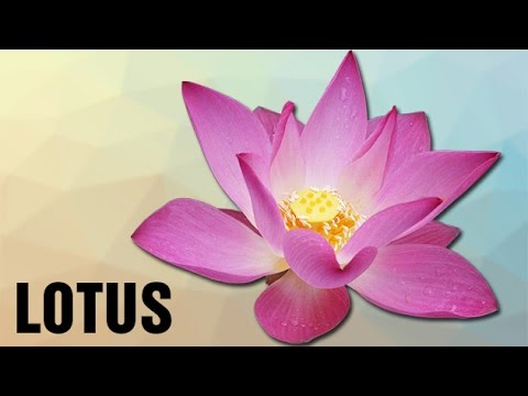 About lotus flower in hindi flowers online 2018 flowers online hindi interesting facts about lotus flower in hindi the national flower of india indian national flower lotus national flower of india lotus the lotus mightylinksfo