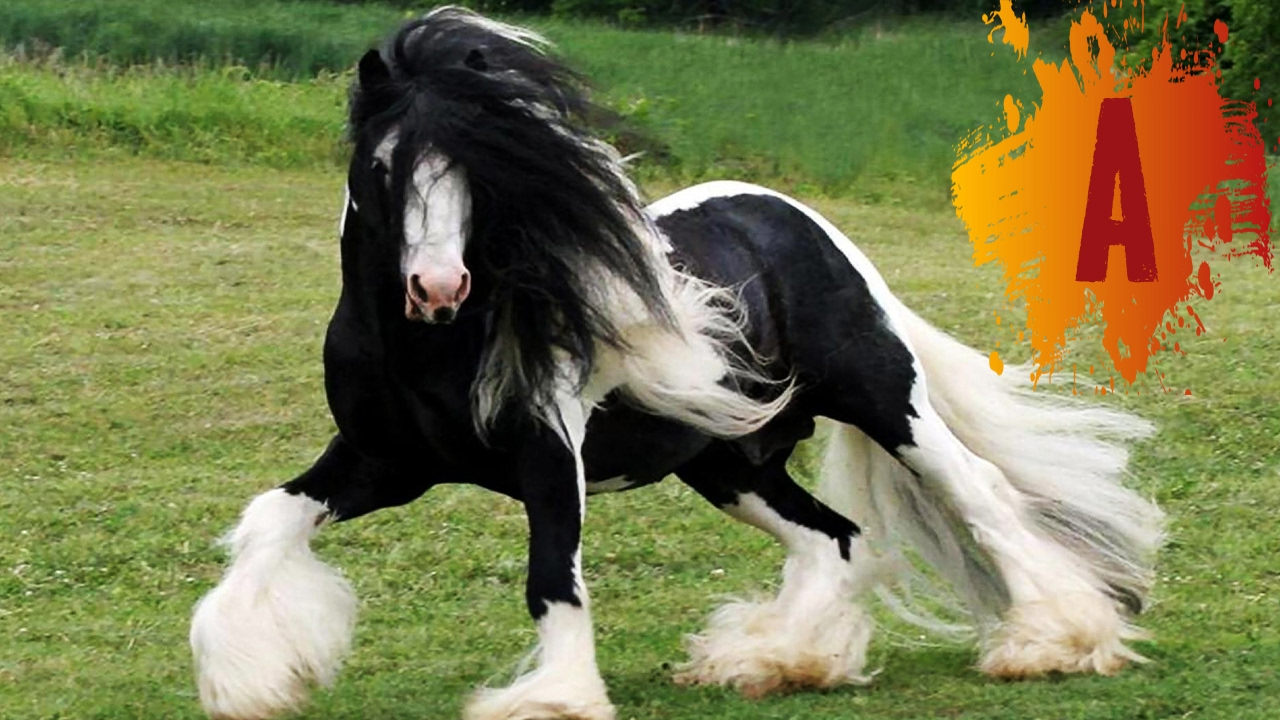 Beutiful Houses 10 Most Beautiful Horse Breeds In The World  Youtube