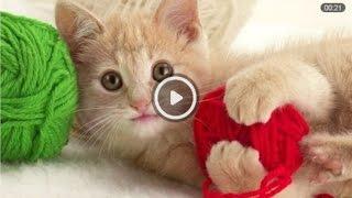 Лучшие приколы Смешные кошки Видео смешные кошки