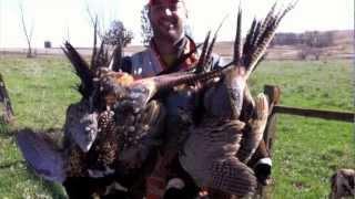 Bow Hunting Pheasant