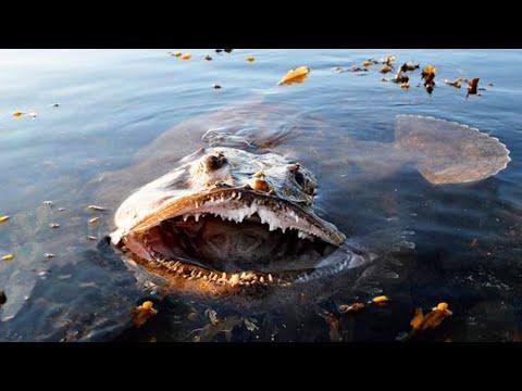 5 Monster aus der Tiefe - Tiere die so wirklich existieren!