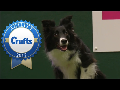 Agility - Large International Invitation Agility Competition (Part 2)   Crufts 2017